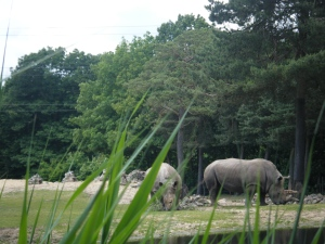 Authors Own : Arnhem Zoo